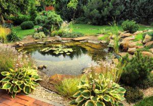Как облагородить декоративный водоем растениями?